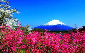 Spring in Japan Wallpapers HD free ...