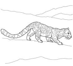 Clouded Leopard Coloring Page Free Printable Coloring Pages
