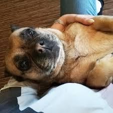 Familienmitgliedhund Instagram Posts Gramhanet