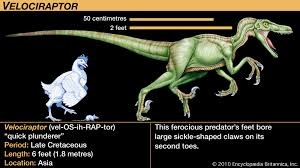 Velociraptor Size Chart Velociraptor Description Size Diet Facts Britannica