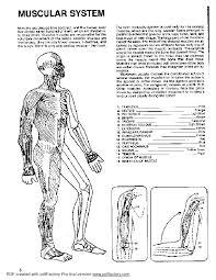 The Human Body Coloring Book Pdf Printable