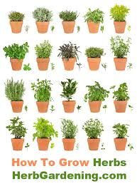 herbs in containers are easy to grow