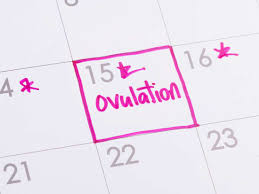 When Am I Most Fertile How To Calculate Your Ovulation Cycle