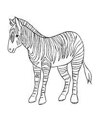 zebra coloring book page