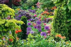 Small Picture Planting Combination Ideas