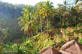 Tegallalang Rice Terraces In Bali Ubud Attractions