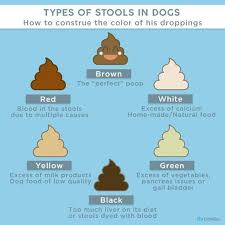Healthy Puppy Poop Chart Are My Dogs Feces Normal