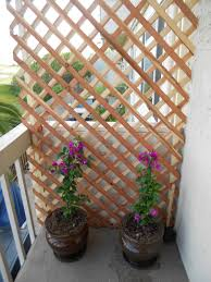 Create a beautiful private balcony by using some lattice wood and your  favorite climbing plant.