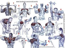 Shoulder Chart Workout Pin On Work Out Shoulders