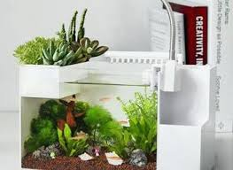 fish for office. Office Desk Fish Tank 7 Best Desktop Aquariums For The Swallow A