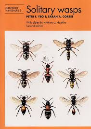 Bee Identification Chart Uk Solitary Wasps