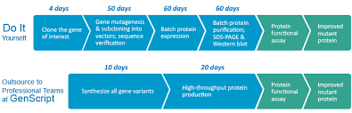 Protein Purification Chart High Throughput Protein Variants Service