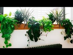 best low light office plants. Office Plant Light Six Low Plants For Your Spider Best