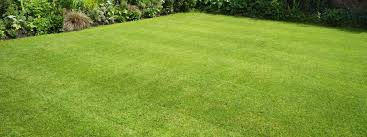 the best lawn fertilizer it depends on your lawn