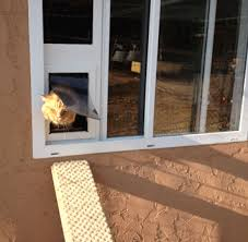 cat using the security boss side sliding window insert