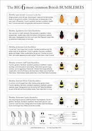 Bee Identification Chart Uk Bumblebee Identification Chart Bee Identification Bee