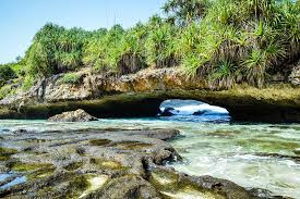 Hasil gambar untuk kelapa muda di pantai srau