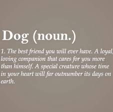 In Memory Of My Best Friend Cyrus Quotes Thoughts Dog Quotes