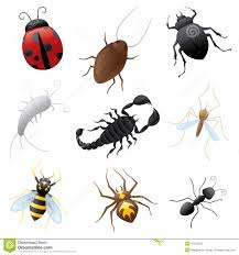 Creepy Crawly Insects Lessons Tes Teach