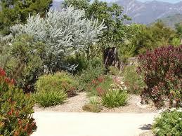 Small Picture Australian Native Plants Resources 8007016517