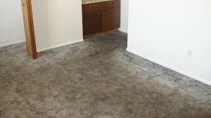 before carpet cleaning wash wool rug rugs dog urine