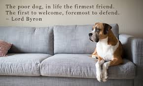 Quotes About Dogs Love New Famous Dog Quotes Which Will Make You Fall In Love With Your Pet