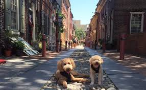 Neo twewy opening over philly nice!! 10 Non Touristy Spots To Visit In Philly With Your Dog This Summer Barkpost