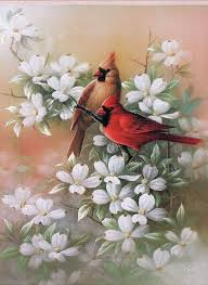 cardinal and dogwood 1 by t c chiu