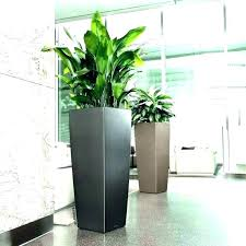 tall flower pots tall plant pots large indoor plant pots the art of decorating with tall tall flower pots