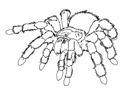 Small Picture Spider coloring pages