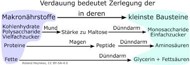 Dünndarm - English translation - Linguee