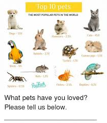 Most Popular Pets Dogs 33 Birds 9 Spiders 05 Top 10 Pets The Most Popular