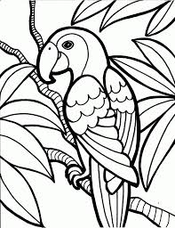 Small Picture bird coloring pages pelican bird coloring pages penguin bird