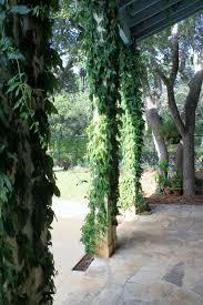 garden duster. Cypress Vine, Chinese Lantern Hibiscus, Red Fairy Duster Garden