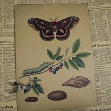 Us 1 7 Butterfly Chart Vintage Poster Retro Painting Wall Art Sticker Home Decoration Classic Print And Picture Bar Cafe Paint 30 21cm In Painting