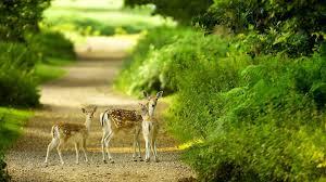 beautiful baby deer green nature wallpaper free full hd