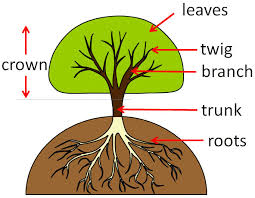 Tree Root Size Chart Trees