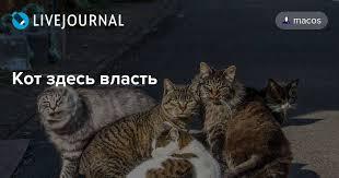 <b>Кот здесь власть</b> - Александр Беленький. Другие путешествия ...