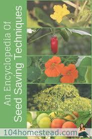 Kitchen Garden Seeds 17 Best Ideas About Saving Seeds On Pinterest Seeds Seed