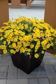 Small Picture 460 best Container Plants for Full Sun images on Pinterest