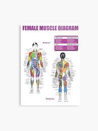 Female Anatomy Chart Female Muscle Diagram Anatomy Chart Metal Print