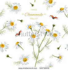 Small Picture Chamomile Stock Images Royalty Free Images Vectors Shutterstock