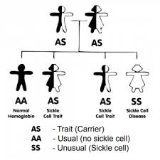 Inheritance Of Sickle Cell Anaemia Sickle Cell Society
