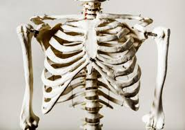 Jan 14, 2020 · bruised ribs take around a month to heal. 6 Possible Causes Of Rib Cage Pain