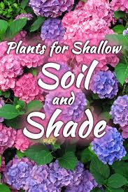 14 plants for shallow soil and shade