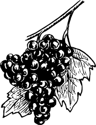 black and white grapes clipart. Simple Grapes Grapes Clip Art Free Vector 26322KB Throughout Black And White Clipart