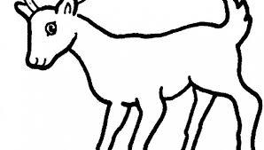 Kleurplaat Hert Schattige Dieren