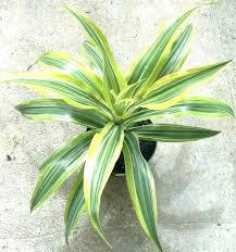 common house plants identification house plants identification common care and identification of houseplants common