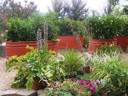 7 galvanized water trough planter beds raised even higher