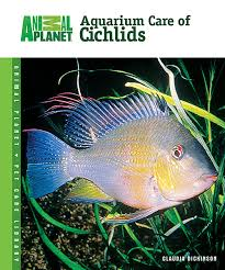 Small Picture Aquarium Care of Cichlids Animal Planet Pet Care Library